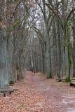 Herbstgasse im Wald Stockbild