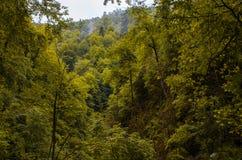 Herbstgebirgswald mit Blatt- Bäumen in Gaucasus, Mezmay Lizenzfreie Stockfotografie