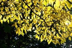 Herbstgefühle Lizenzfreie Stockbilder
