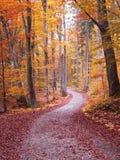 Herbstgehweg durch Buchenbaumwald Lizenzfreie Stockbilder