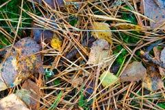 Herbstgelb-Blatt-, gelb gefärbte und gerötetesblätter von Bäumen im Herbst Lizenzfreies Stockfoto