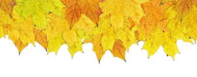 Herbstgelbblätter Stockfotos