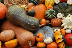 Herbstgemisch Lizenzfreie Stockbilder