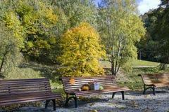 Herbstgeschenkkonzept Lizenzfreie Stockfotografie