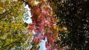 Herbstgeschichte im intself Lizenzfreies Stockbild