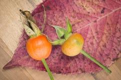 Herbstgeschmack, Hagebutten und rotes Blatt Lizenzfreie Stockbilder