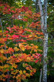 Herbstglück Lizenzfreie Stockfotografie