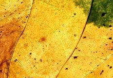 Herbstgold Stockfoto