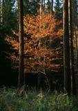 Herbstgoldkreationen Stockbild