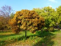 Herbstgründe Lizenzfreie Stockfotos