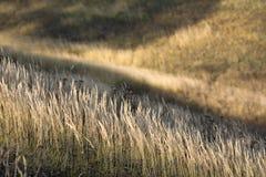Herbstgras auf dem Hügel Lizenzfreie Stockfotos