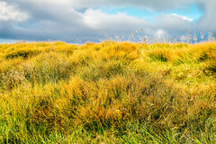 Herbstgras in den Bergen Lizenzfreies Stockfoto