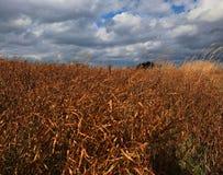 Herbstgras unter dem blauen Himmel Stockbilder