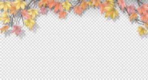 Herbstgrenze mit Ahornblättern Lizenzfreie Abbildung
