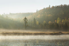 Herbsthügel und -kiefer entlang Fluss mit Morgennebel Stockfotografie