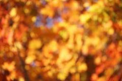 Herbsthintergrund Lizenzfreie Stockfotos