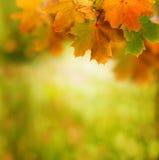 Herbsthintergrund Lizenzfreies Stockfoto