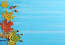 Herbsthintergrund - Ahorn- und Eichenblätter, Eicheln und Hagebutten Lizenzfreies Stockbild