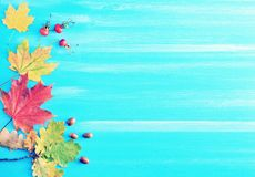Herbsthintergrund - Ahorn- und Eichenblätter, Eicheln und Hagebutten Stockbild