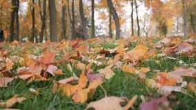 Herbsthintergrund der gelben Blätter stock video footage