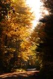 Herbsthintergrund des frühen Morgens Stockfotos