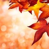 Herbsthintergrund eingefaßt mit Blättern Stockfotos