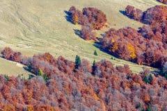 Herbsthintergrund im Holz Horizontale Ansicht einer Reinigung, auf Th Stockbild