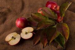 Herbsthintergrund mit Äpfeln stockbild