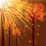 Herbsthintergrund mit Bäumen und fallenden Blättern Stockfotos