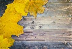 Herbsthintergrund mit Blättern stockbild