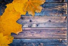 Herbsthintergrund mit Blättern lizenzfreies stockbild