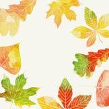 Herbsthintergrund mit Blättern Stockfotos