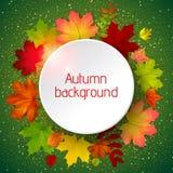 Herbsthintergrund mit Blättern lizenzfreie abbildung