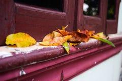 Herbsthintergrund mit Blättern auf Fenster Stockfotografie