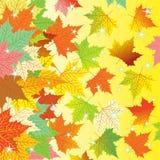 Herbsthintergrund mit bunten Ahornblättern Stockfoto