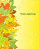 Herbsthintergrund mit bunten Ahornblättern Stockbilder