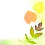 Herbsthintergrund mit einem Muster von den Blättern Lizenzfreie Stockbilder