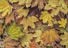 Herbsthintergrund mit getrockneten Blättern Lizenzfreie Stockfotos