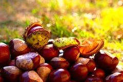 Herbsthintergrund mit Rosskastanien Lizenzfreies Stockbild