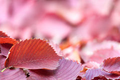 Herbsthintergrund mit roten Blättern Lizenzfreie Stockfotos