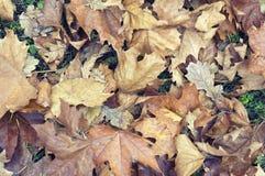Herbsthintergrund mit trockenen Blättern Lizenzfreie Stockfotos