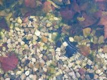 Herbsthintergrund unter gefrorenem Wasser Lizenzfreies Stockfoto