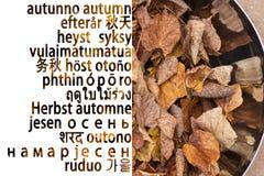 Herbsthintergrund in vielen Sprache lizenzfreies stockfoto