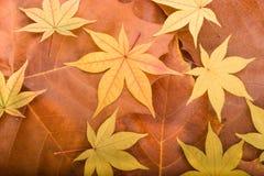 Herbsthintergrund von den Ahornblättern Stockfotografie