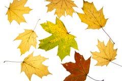 Herbsthintergrund von den Blättern Stockfoto