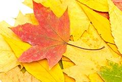 Herbsthintergrund von den Blättern Lizenzfreie Stockfotos