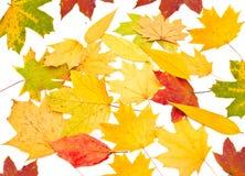 Herbsthintergrund von den Blättern Lizenzfreies Stockbild