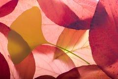Herbsthintergrund von den Blättern Stockbilder