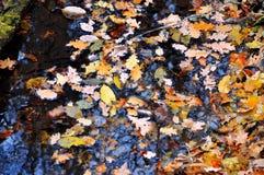 Herbsthintergrund von den gefallenen Blättern Stockbild