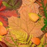 Herbsthintergrund von den gefallenen Blättern des kanadischen Ahorns, des Farns, der Himbeere und des Physalis Stockfotografie